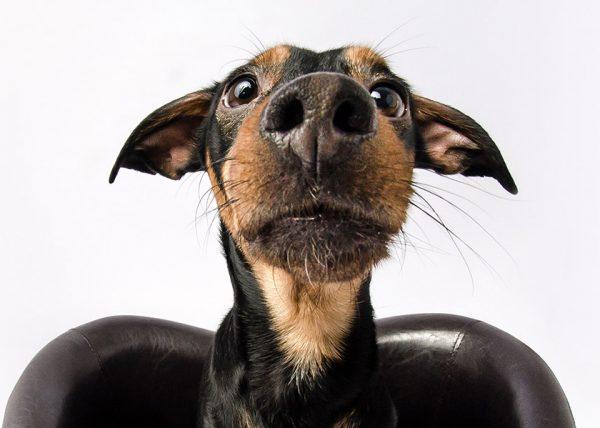 MIXED DOG