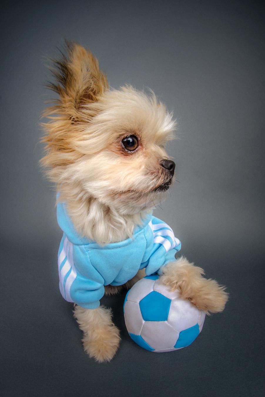 football-dog