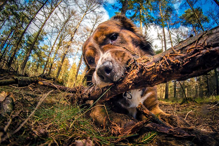 wild-dog-woods